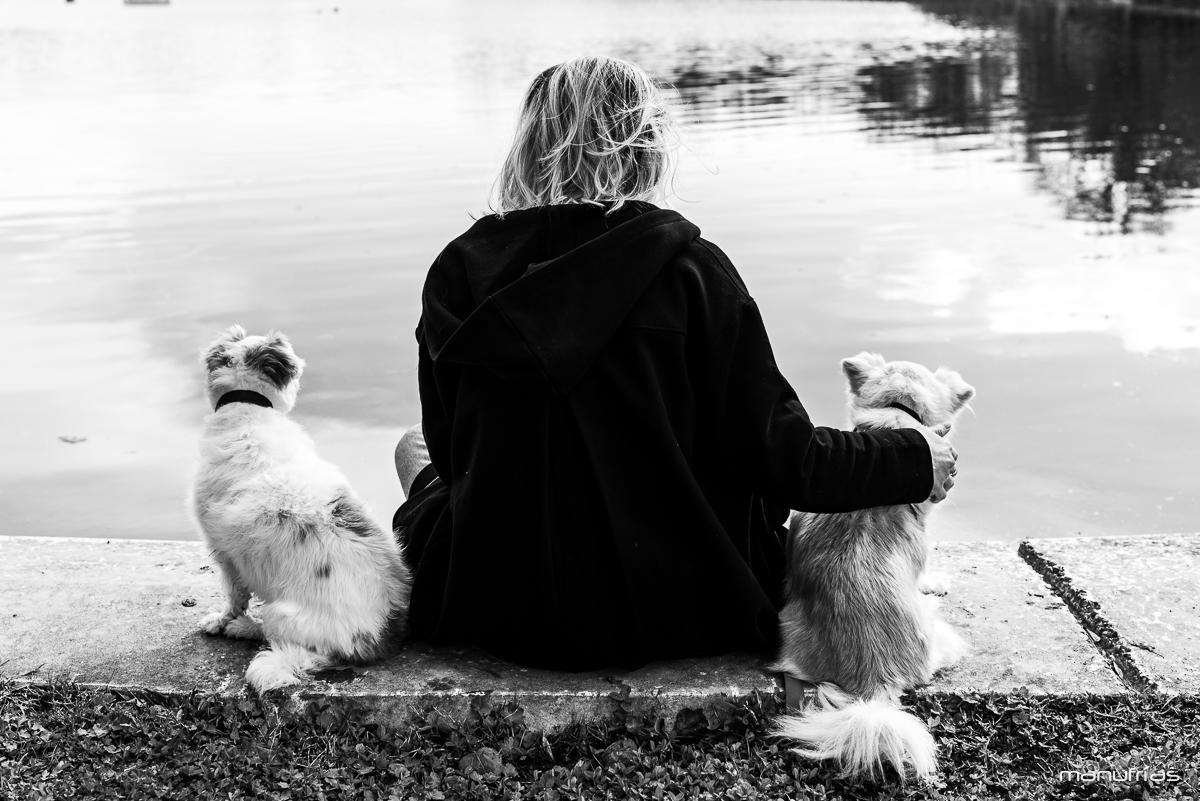 manufrías-fotografia-de-perros-sevilla